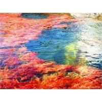 Binlerce Renk Tonunu Barındıran Nehir