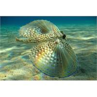 Denizin Dibinde Sadık Kalanlar / Saklı Yaşamlar…