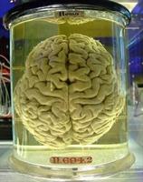 İnsan Beyninin Duyulmamış Sırları