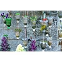 Duvar Çiçekleri Ve Geri Dönüşüm Saksıları