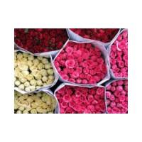Sınav Stresini Çiçeklerle Azaltın