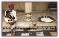 Farelere Adanmış Bir Tapınak: Karni Mata Tapınağı