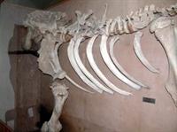 Müzeler Ve Örenyerleri, (kahramanmaraş Müzesi, Kar