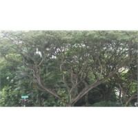 Doğaya Dön Bak, Aradığın Neyse Bulacaksın…