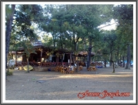 Çubucak Orman Kampı - Marmaris