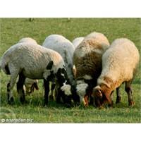 AB'den Tarım Ve Hayvancılığa Hibe Desteği