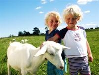 Keçi Sütünün İnanılmaz Faydaları