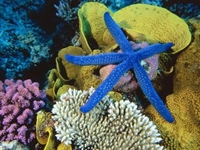 Hayvanlar Dünyasının Su Aleminin Yıldızları