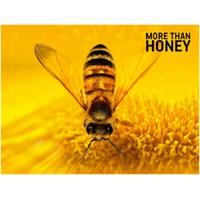 Arıların Gizemli Kayboluşu