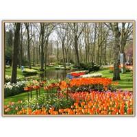 Çiçek Parkı | Hollanda - Keukenhof