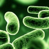 Ağızda Şişmanlatan Bakteriler Bulundu