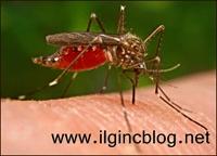 Sivrisinekler İle Uçan Aşı Yöntemi