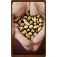 Argan Yağı Ve Argan Yağlı Ürünler
