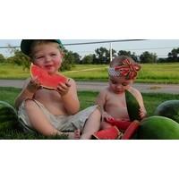 Tüm Çocuklar Meyve İle Özgür