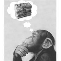 Maymunlara Para Kavramını Öğretirseniz N'olur?