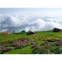 Trabzon Adı Nerden Gelmektedir ?