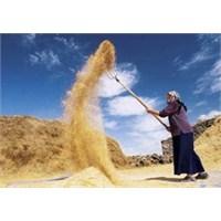 Kadın Çiftçi Sevilay