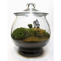 Mini Dünya Terrarium 20 Adet Örnek Sizlerle