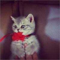 Murat Boz'un Kedisi Paris Neden Öldü?