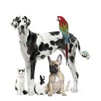 4 Ekim Hayvanları Koruma Haftası