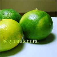 Yeşil Mandalina Yiyor Musunuz?