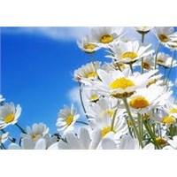 Mevsim Değişikliğinde Sağlığınıza Dikkat Edin