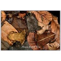 Çubuk Böceği | Doğanın Hilebazları