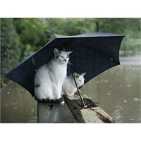 10 İlginç Şemsiye Tasarımı