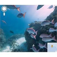 Google Maps Artık Denizin Altını da Gösteriyor