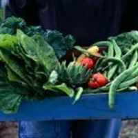 Sebze İle Gelen Sağlık..
