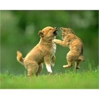 Kedi Köpek Kavgasi!