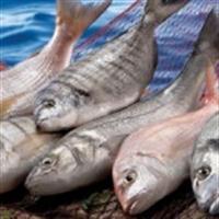 Balıkta Ağır Metal Tehlikesi İddaları!