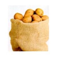 Tatlı Patates Yetiştirmek