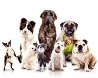 Köpek Oteli Filmi