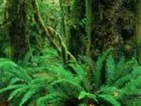 Yağmur Ormanları Şimdilik Kurtuldu