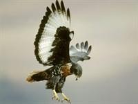 Çok Güzel Kuş Resimleri