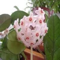 Çiçek Bakımı İçin Gerekenler - Püf Noktalar