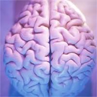 Beyine Zararlı Gıdalar