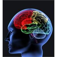 Beyin Hasarlarının Tedavisinde Yeni Bir Yöntem