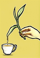 Bitki Çayını Fazla İçmek Zararlı Mı?