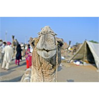 Pushkar Camel Fair – Deve Festivali