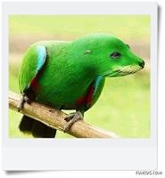 Hayvanları Ne Hale Getirmişler-photoshop Ayarlamas