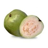 Yeni Bir Besin Guava