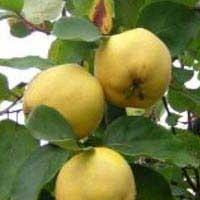 Kalp Ve Karaciğere Yararlı Meyve...