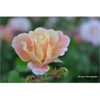 Doğadan İlk Makro Çekimlerim Çiçekler