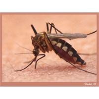 Sivrisinek Kovucu Önlemler