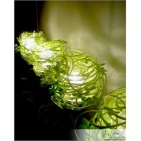 Yeşil Asma Lamba