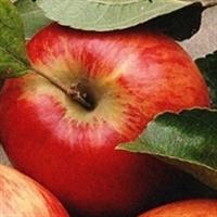 Sağlıklı Kalplerin İhtiyacı 5 Gıda