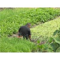 Tarım Bakanlığından Çiftçilere Online Hizmet