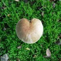 Aşkın Zehirli Mantarları